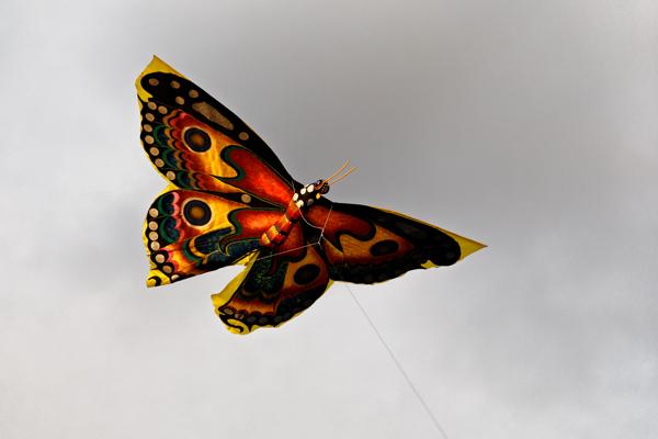 Kupu for Butterfly