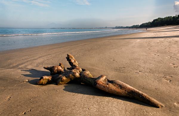 Basking Log