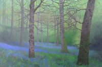Bluebell Glade - Between Showers
