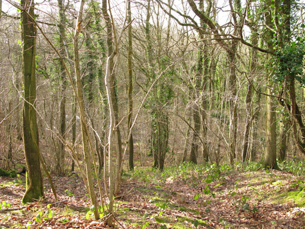 Path beside quarry