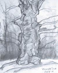 March - venerable oak