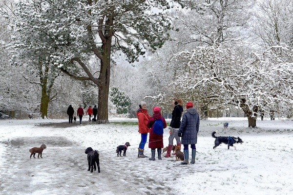 Dog Walking, Valley Gardens