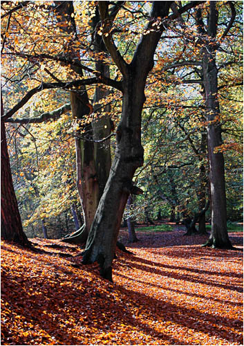 Hookstone woods in Autumn