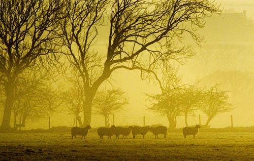 Misty Sheeep