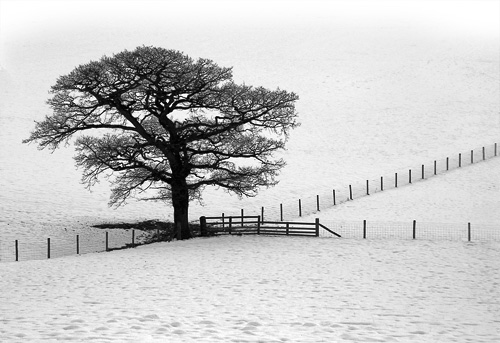 A Tree, fences and snow