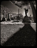 Angel Shadow 2