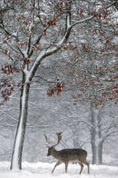 First-Winter