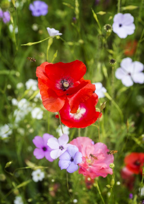 Mr Morris's garden 2