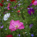 Mr Morris's garden 3