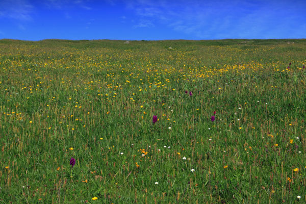 Machair, Northton