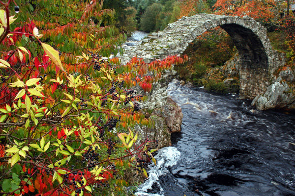 Carrbridge in Colour - Cairngorms