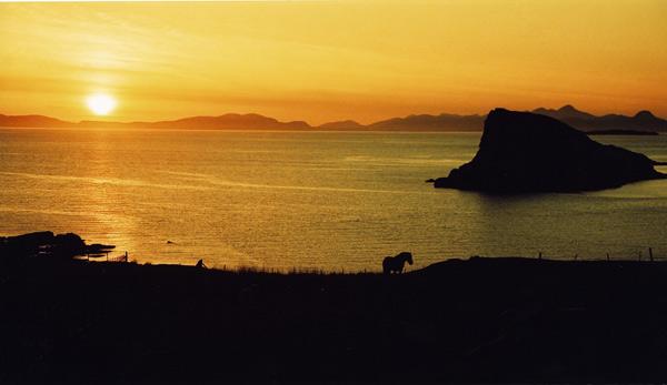 Duntulm Horse - Isle of Skye