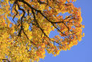 Canopy Colours 2
