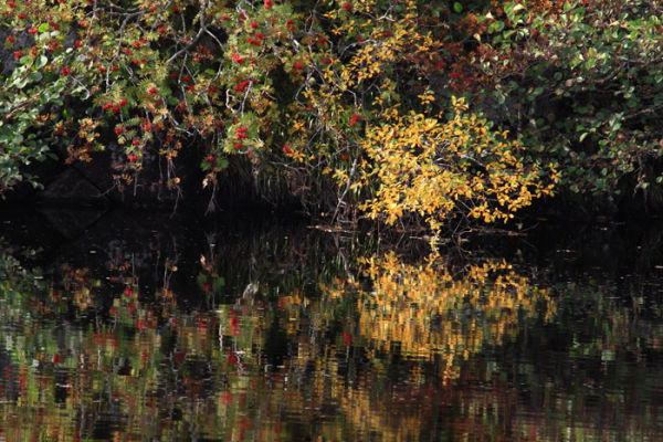 Rowan Reflections