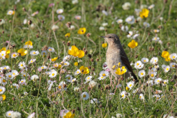 The rabbits were not alone in the Machair...