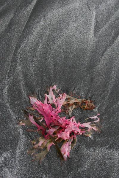 Seaweed Swirl, Loch Buie