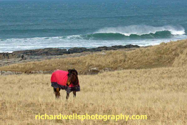 Horse in sand dunes at Saligo bay