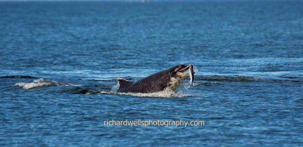 Spey Bay Close Encounter...