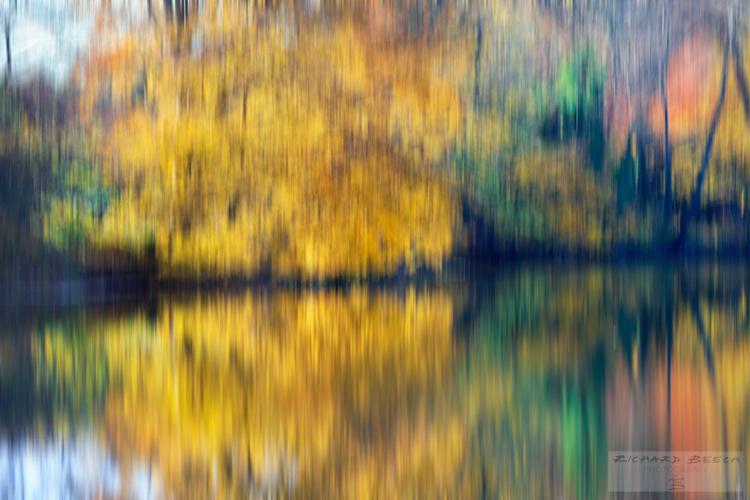Autumn Colours of Blandford Forum