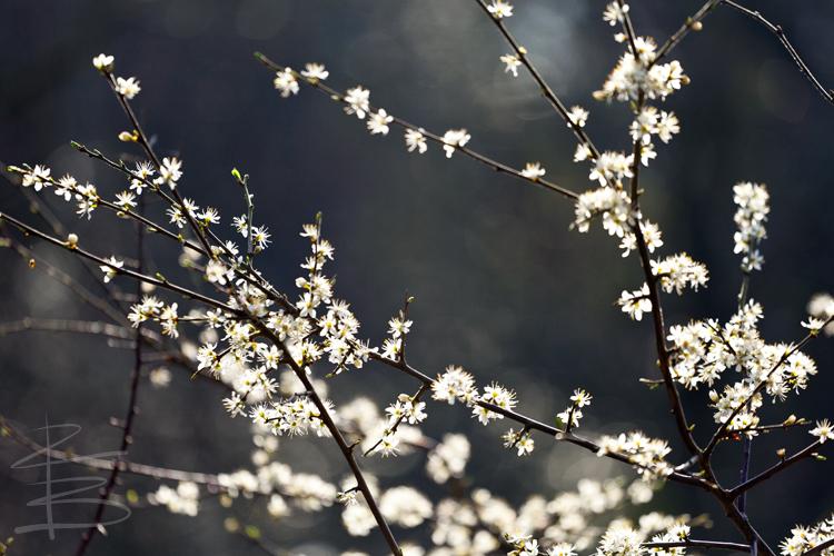 Urban Blossom