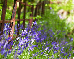 Bluebell Fence