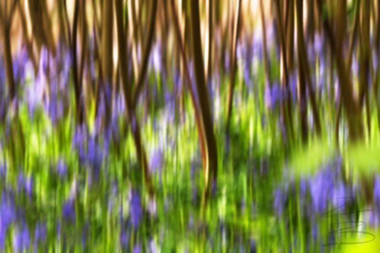 Bluebell Blur