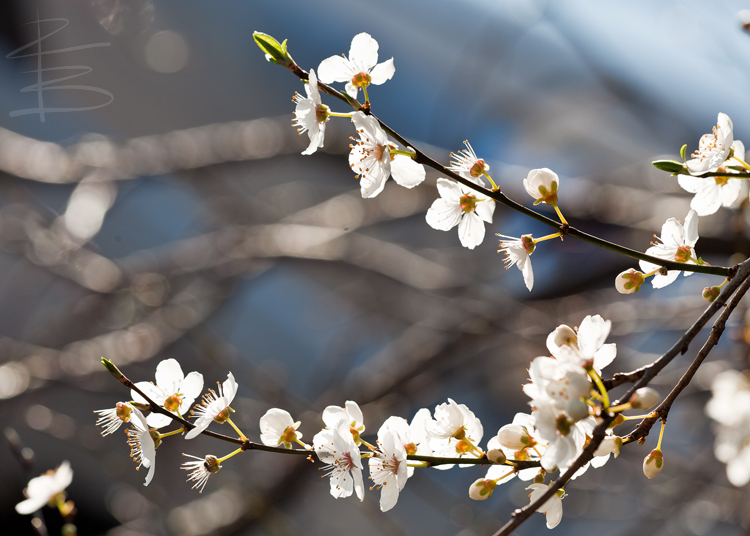 Spring Approaching