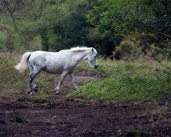 Egdon Heath Pony