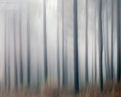 Misty woods blur