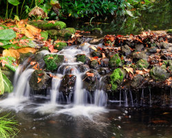 Autumn Leaves in the Stream