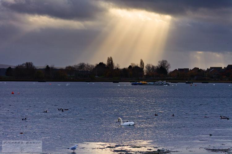 Sun Rays and Swan