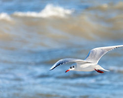 Gulls and Waves 3