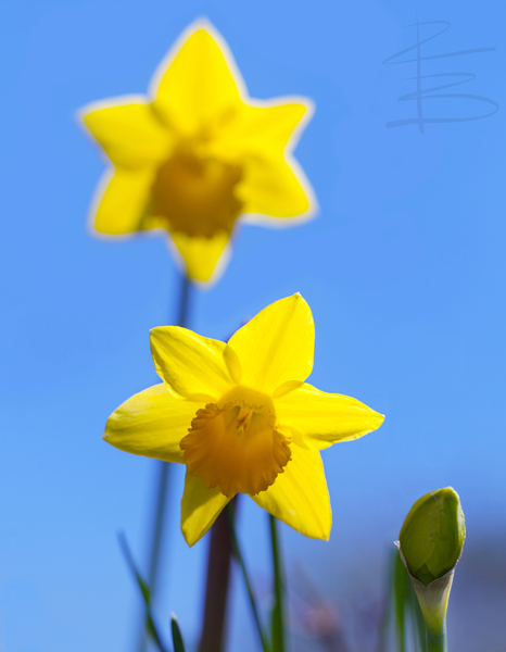 Stars of Spring