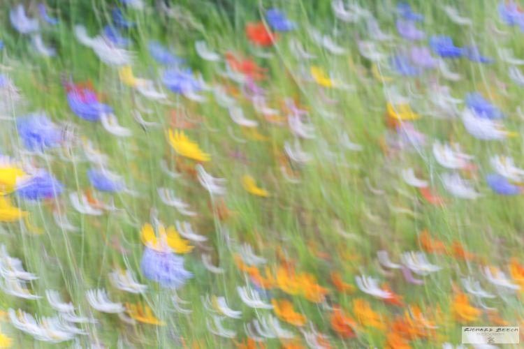 Summer Wildflowers Impressionism