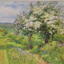 Hawthorn Blossom near Hound Tor SOLD Limited edition gicle prints available