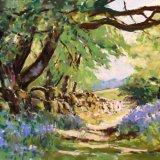 Bluebells at Shallowford Dartmoor