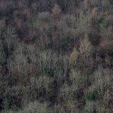 09-002-025-1975-1 - Winter Forest, Toadsmoor Valley