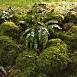 09-003-002-2088 - Ruined wall, moss-covered