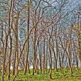 09-003-002-2113 - Lypiatt wood