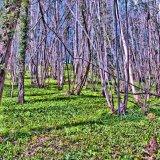 09-003-004-2146 - Toadsmoor woods