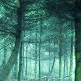 Ghostly Wood