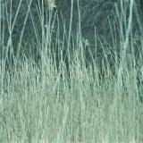 Grasses (Cirencester)
