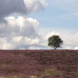Moors above Sheffield