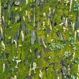 Mossy wall, Pembrokeshire