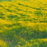 Sunlit meadow Pembrokeshire