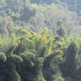 Where the wild things are (Nam Ou, Laos)