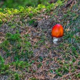 Fearnoch Forest Mushroom