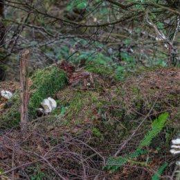 Fearnoch Forest Fungi