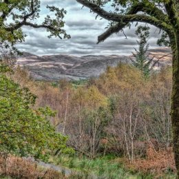 Fearnoch Forest Country View