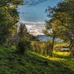 Loch Awe Pasture